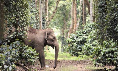 India: Elephants in My Backyard